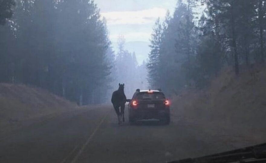 Anna White saves horse from Washington wildfire