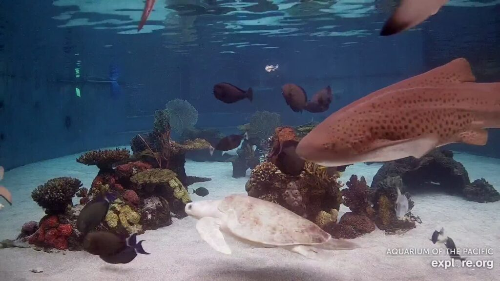 Watching the Ocean 1,000 Miles Away Via a Webcam