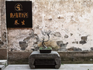A plant on a pedestal before an old wall with a Chinese sign.